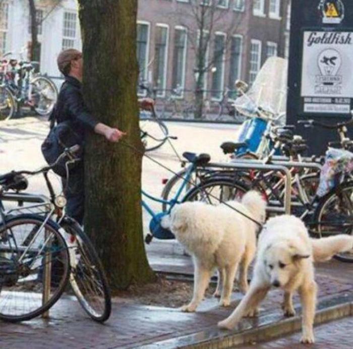 Вы когда-нибудь выгуливали собак?| Фото: Playbuzz.