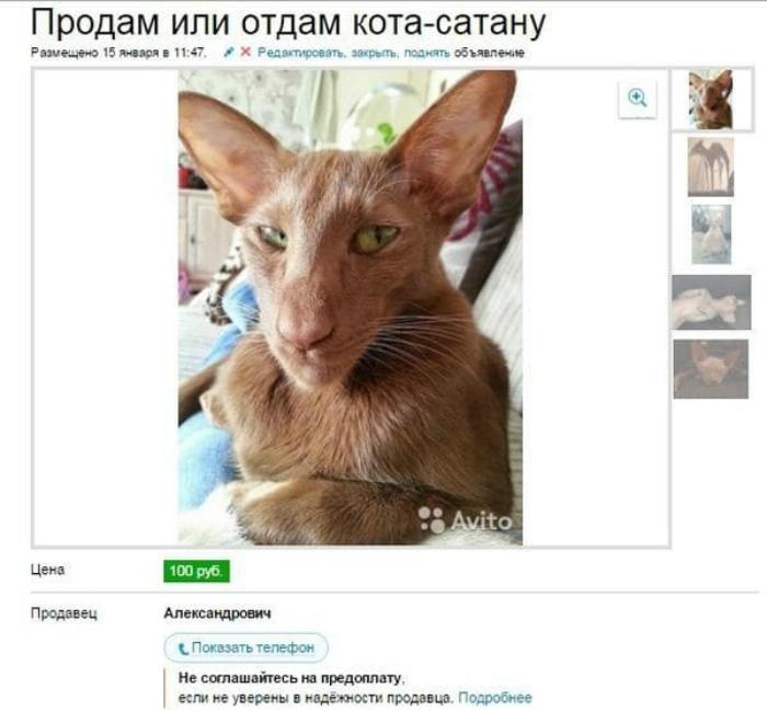 Кому Сатану. | Фото: Sympa-sympa.com.