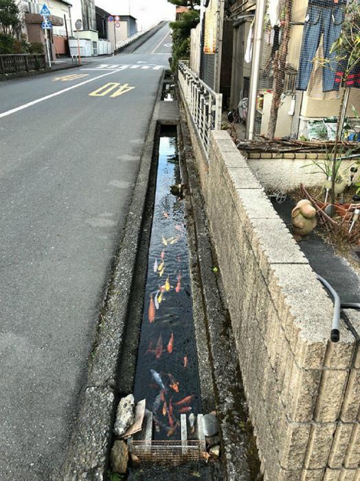 Канавы с рыбками. | Фото: i24.com.ua.