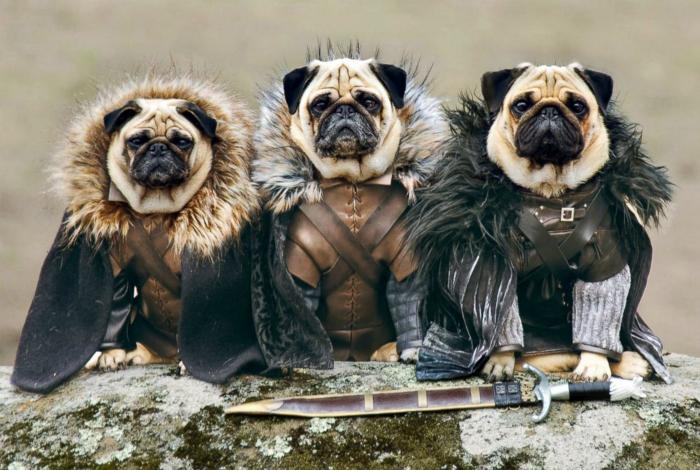 Нарядные собаки.