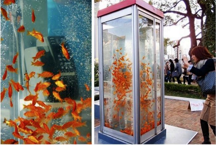 Телефонная будка с рыбками. | Фото: Useful Gen.