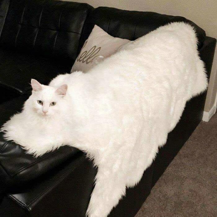 Расплылся по дивану. | Фото: No One Cares.
