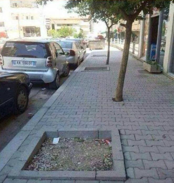 «Откуда же мы знали, что эти деревья могут перемещаться!» | Фото: Pinterest.