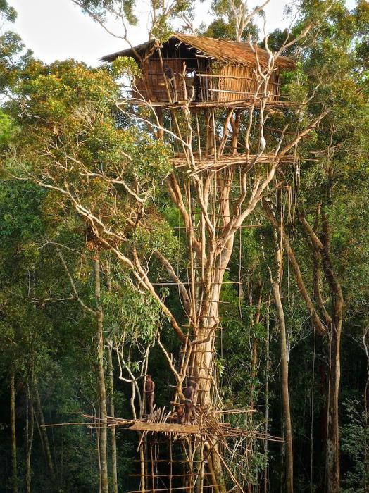 Хижина племенем Korowai, возведенная на огромной высоте.