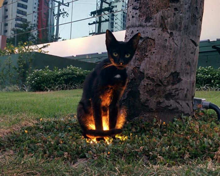 Кот сел на лампочку.