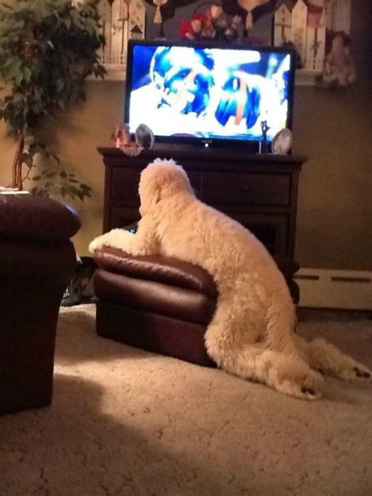 Собака с человеческими повадками.