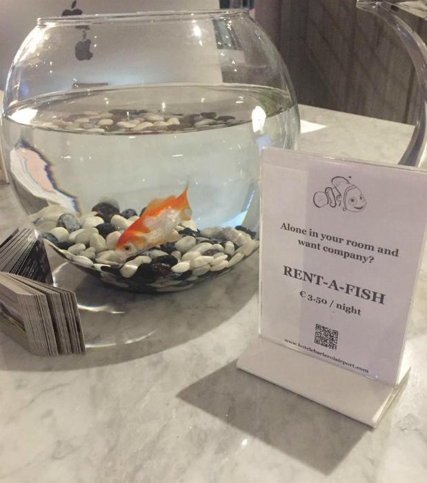 Аквариумная рыбка на прокат.