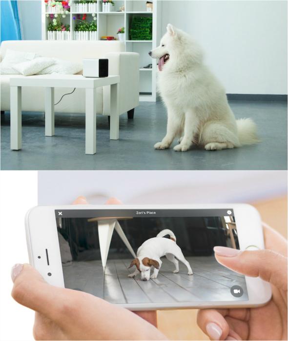 Собачья радионяня Petcube Interactive.