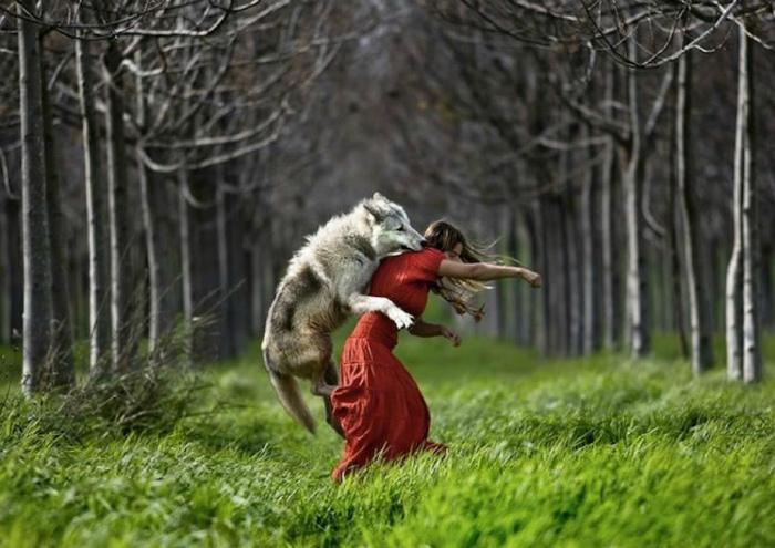 «Красная шапочка и серый волк. Часть 2.»| Фото: Zefirkа.