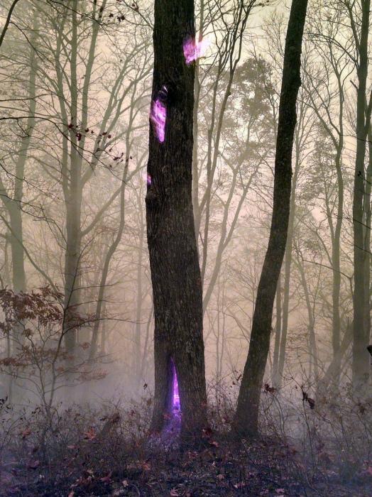 Дерево, горящее изнутри.