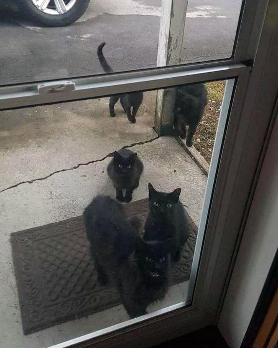 Подозрительное столпотворение черных котов. | Фото: Pixmafia.com.