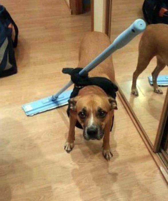 «Усовершенствовал» собаку.