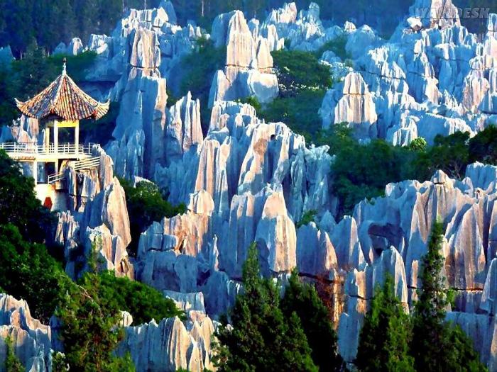 Известняковые скалы, похожие на стволы деревьев.