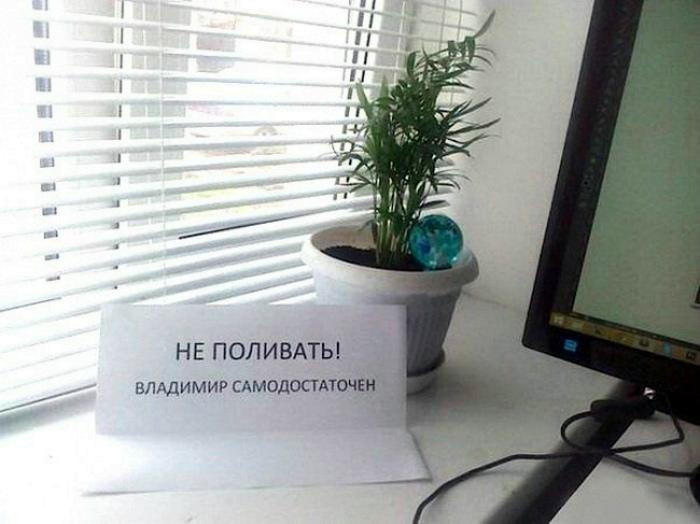 Цветок по имени Владимир.