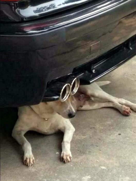 Собака с турбоглазами. | Фото: МирТесен.