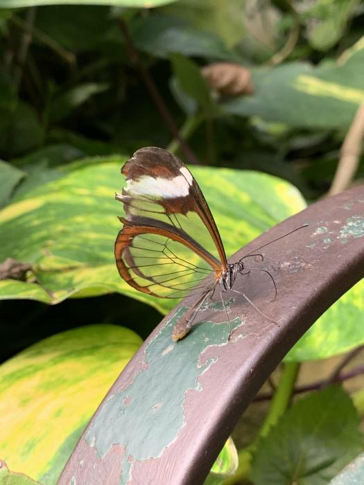 Бабочка с потрясающей расцветкой.   Фото: Redditery.