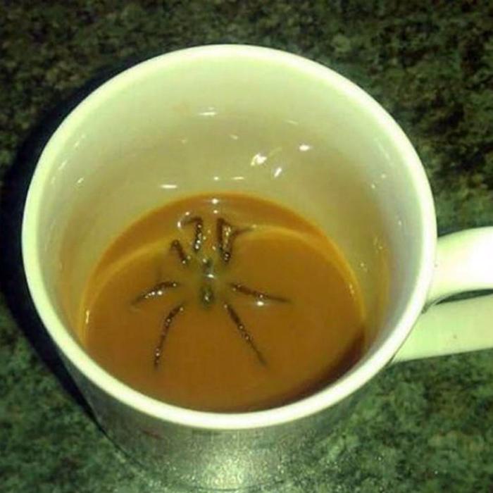 Паук вместо кофеина.