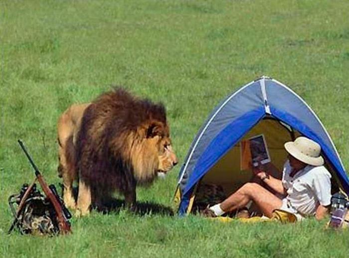 Встреча с царем зверей. | Фото: yaplakal.com.