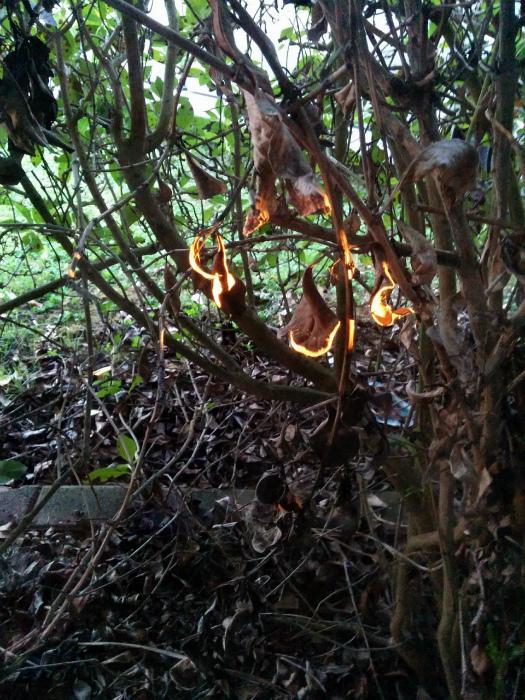 Солнечные блики на листьях.