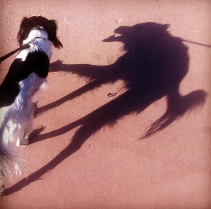 Пугающая тень.