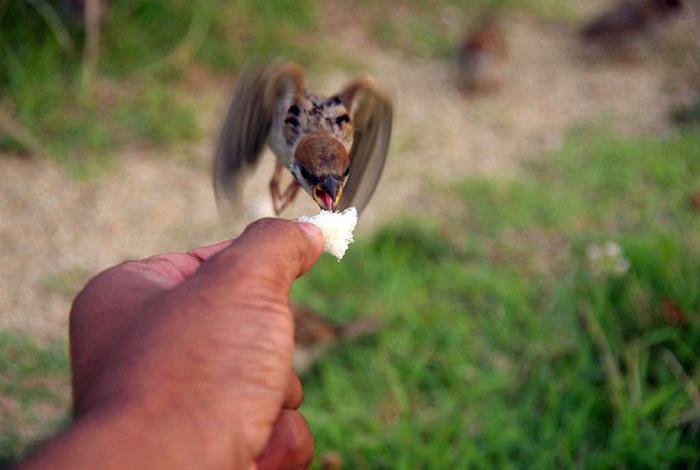 Эта птичка свое не упустит! | Фото: Reddit.