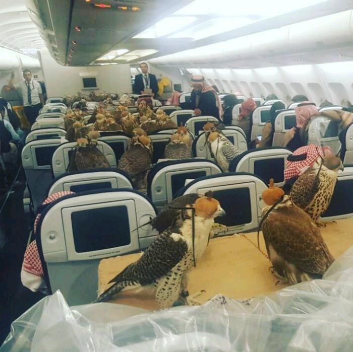 Места для птиц.