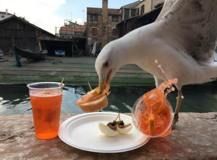 Кажется, чайка наплевала на столовый этикет! | Фото: fishki.net.
