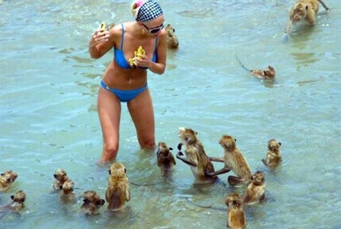 Голодные обезьяны.