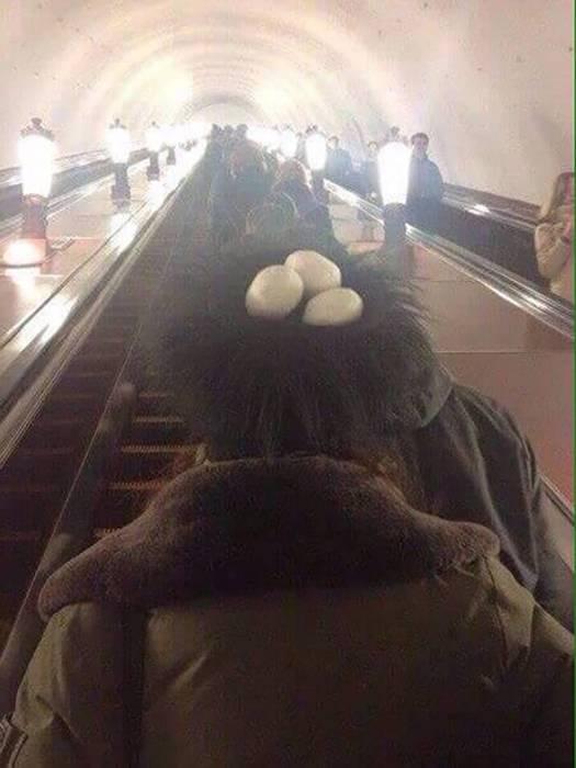 Гнездо на голове.