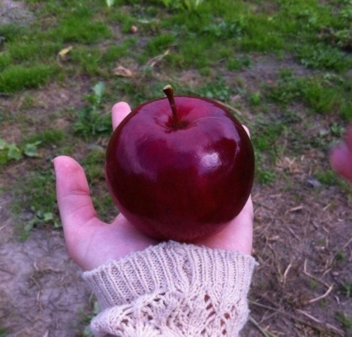 Идеальное яблоко.