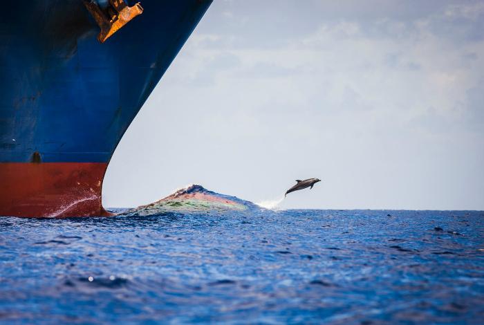 Реактивный дельфин на взлете.