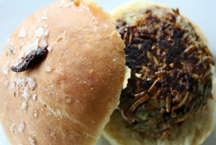 Бургер с мучными червями, сверчками и кузнечиками.