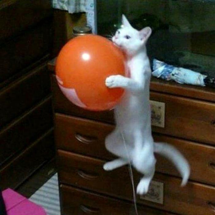 Кот на шаре.