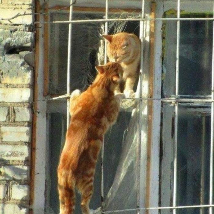Кошачья романтика.