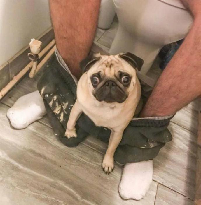 Никакого одиночества, даже в туалете!