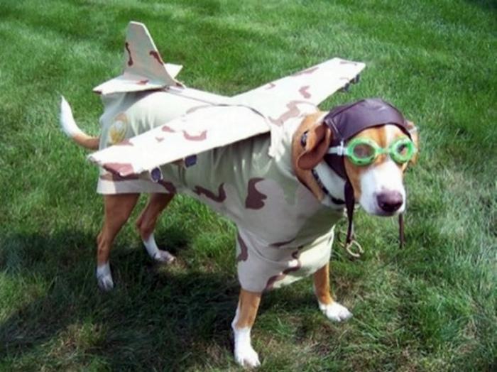 Собака в костюме самолета.