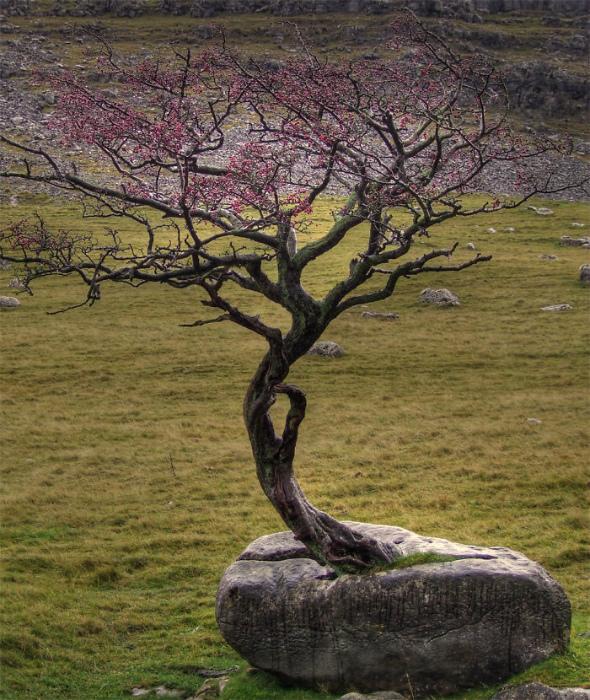 Дерево в камне.
