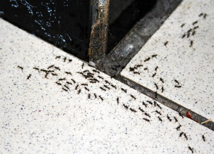 Борьба с муравьями.