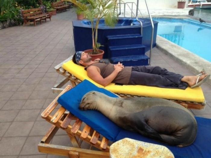Морской котик на отдыхе.