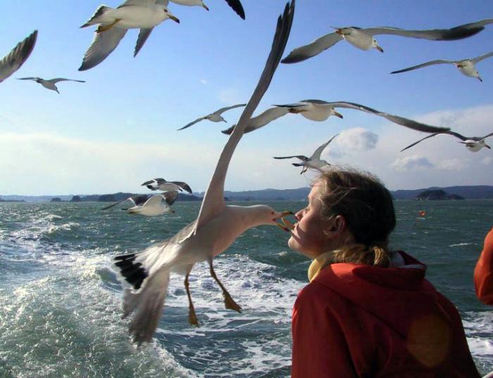 Морская романтика.