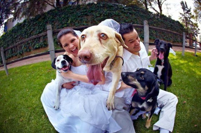 Собаки с радостью поучаствовали в фотосессии молодоженов.