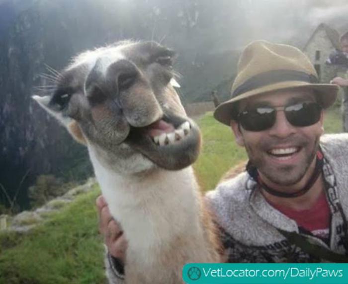 Снимок мужчины и жизнерадостной ламы.