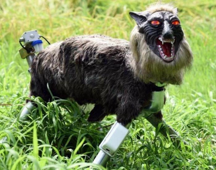 Роботы-волки для охраны. | Фото: Reddit.