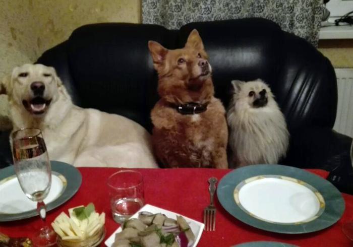 Почетные гости.