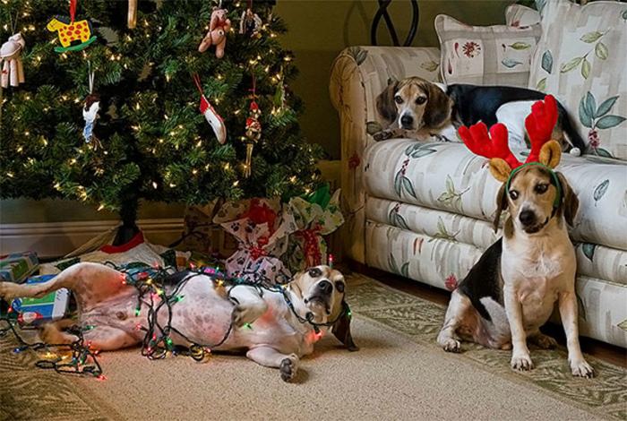 Собаки и атрибуты праздника.