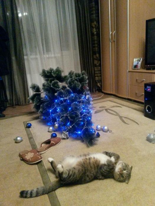 Кот буянил.