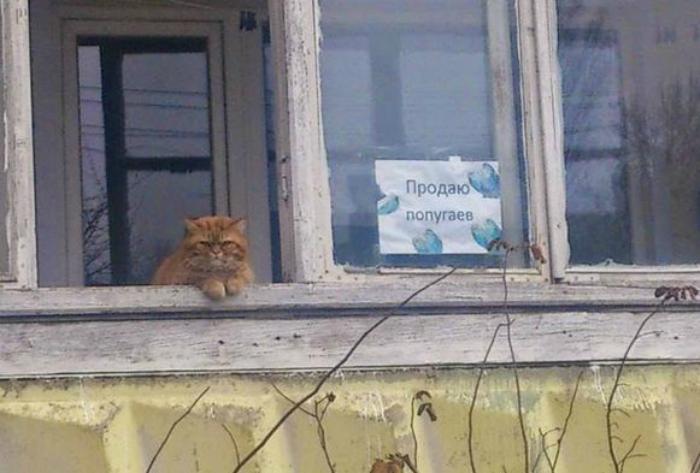 Ничего удивительного, просто кот продает попугаев.