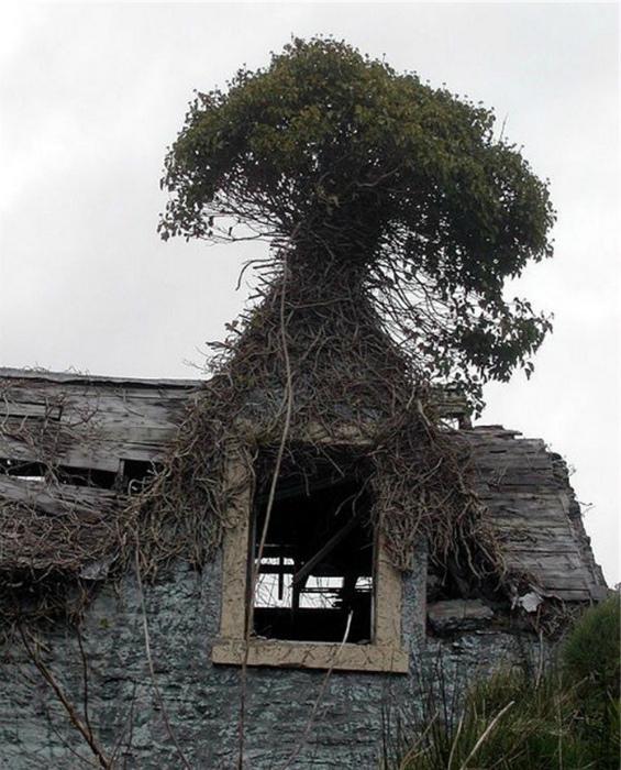 Дерево на крыше.