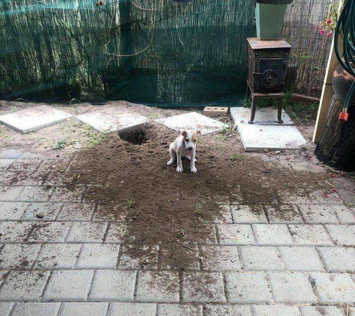 Когда взял себе «хорошего» щеночка. | Фото: Пикабу.