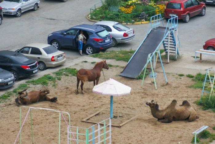 Теперь это не просто детская площадка, а еще и зоопарк! | Фото: Пикабу.